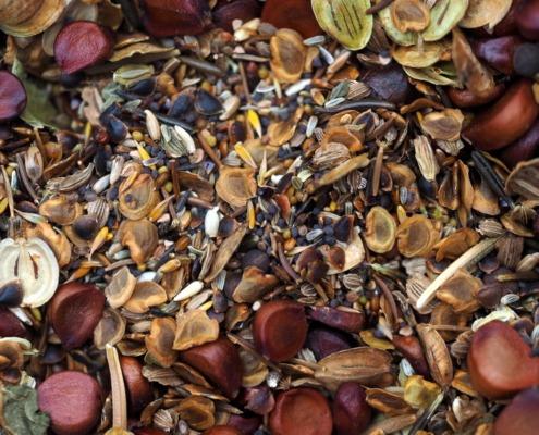 Bloemrijkgras zaden